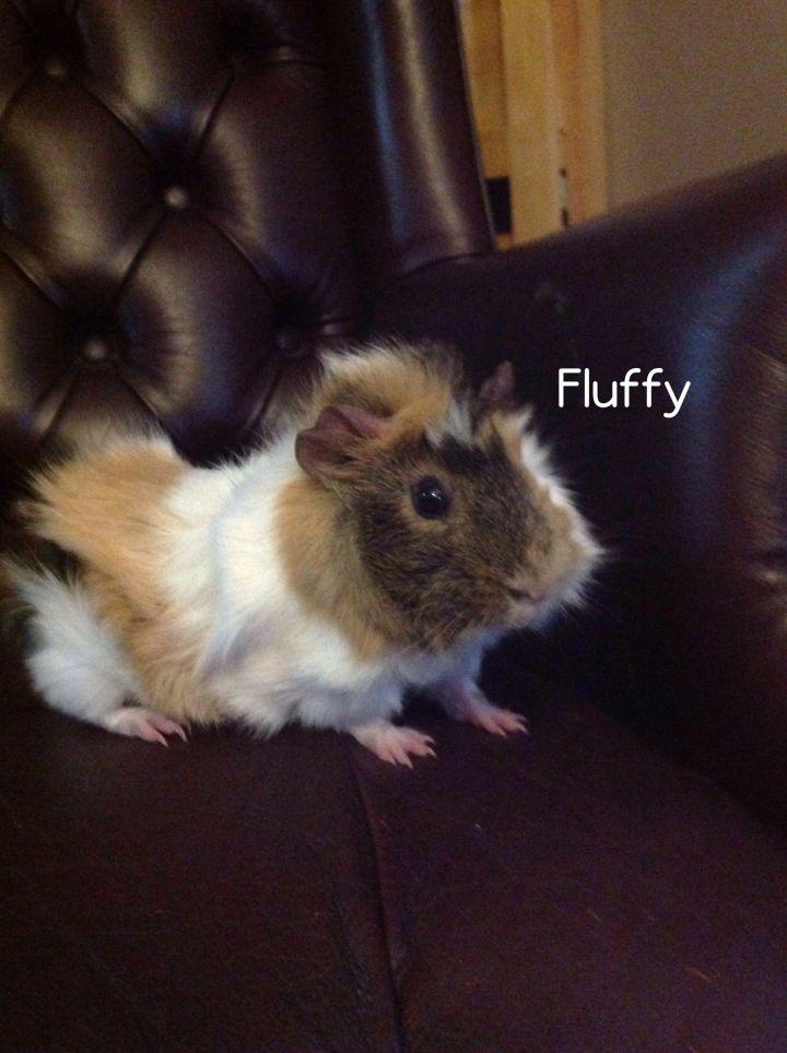Fluffy 1