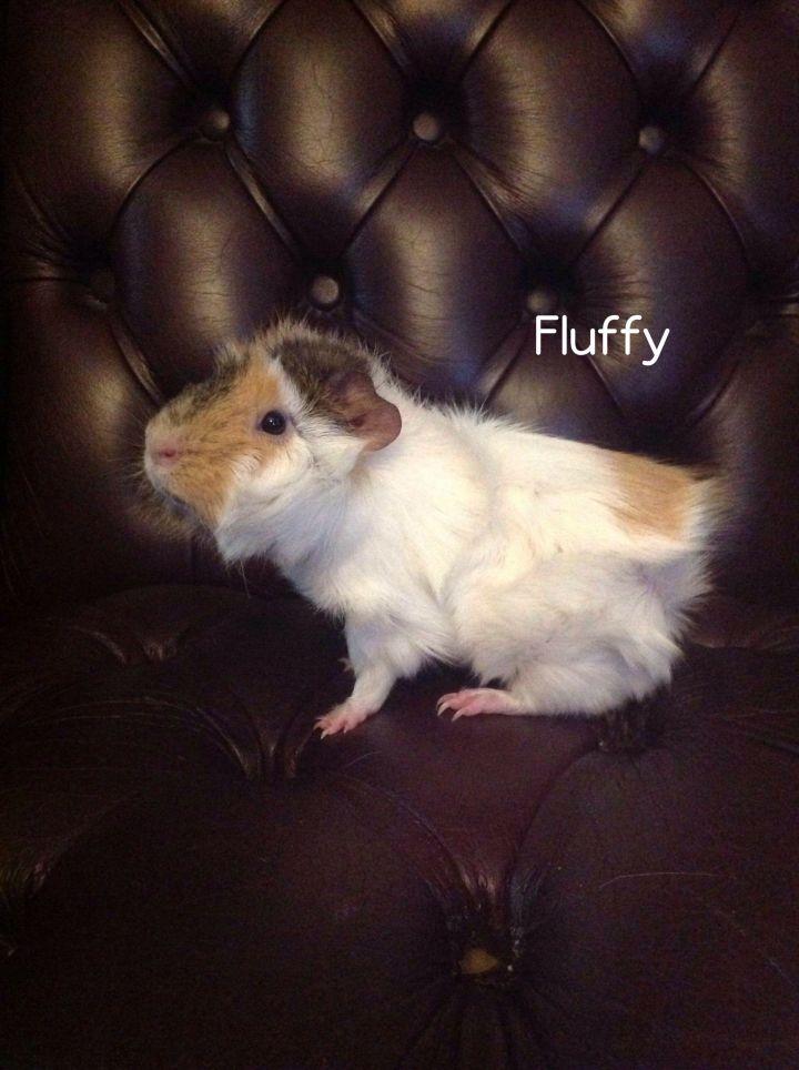 Fluffy 3