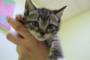 Mary Lupe, Soos, Dipper and Mable