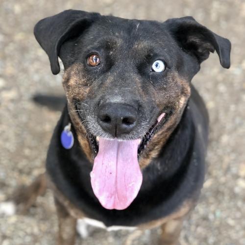 Rottweiler Dog Breed Profile Petfinder