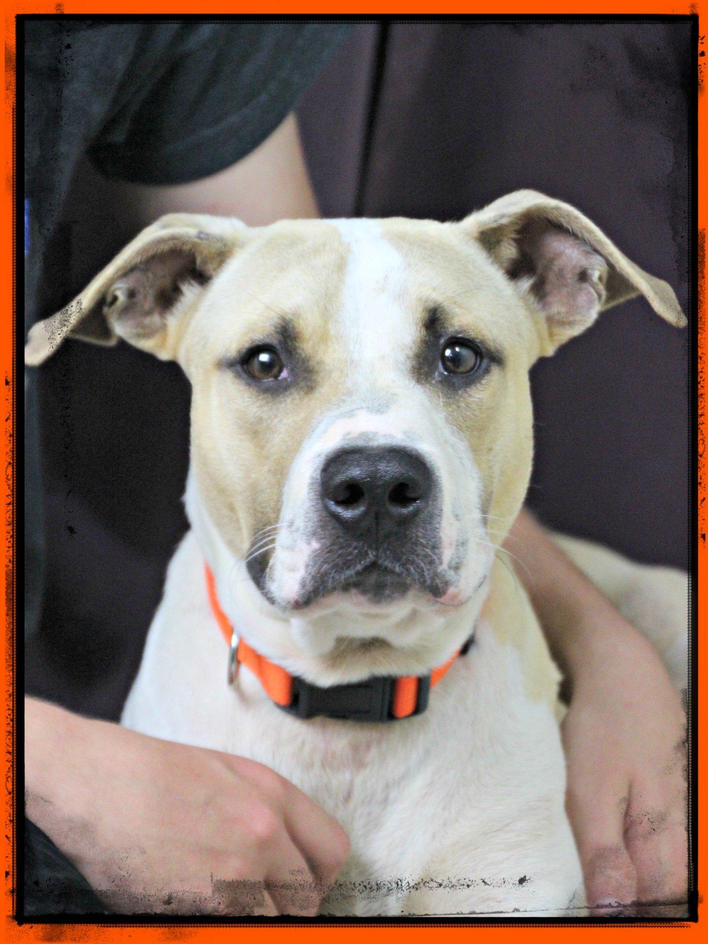 Dog for Adoption – Zimmer, near Hardinsburg, KY | Petfinder