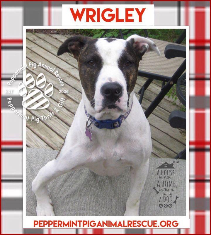 Wrigley 2