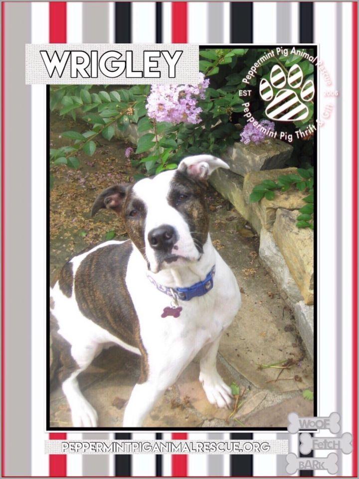 Wrigley 3