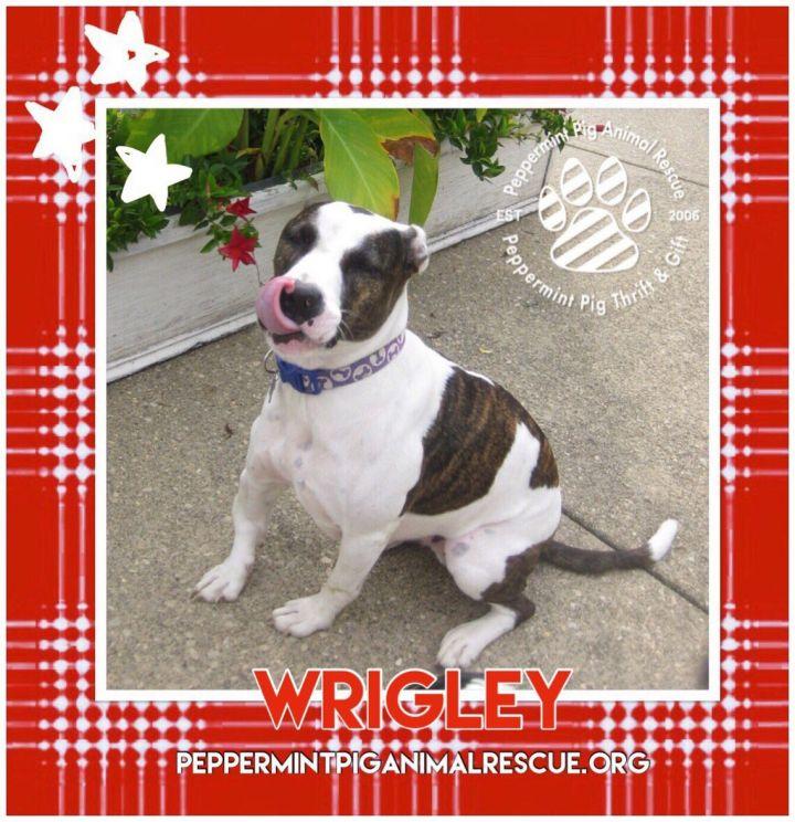 Wrigley 4