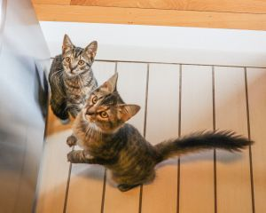 Kalini & Sachiko