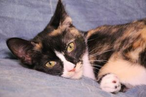 Jelly is a beautiful girl who was born with Cerebellar Hypoplasia CH She is what is referred affe
