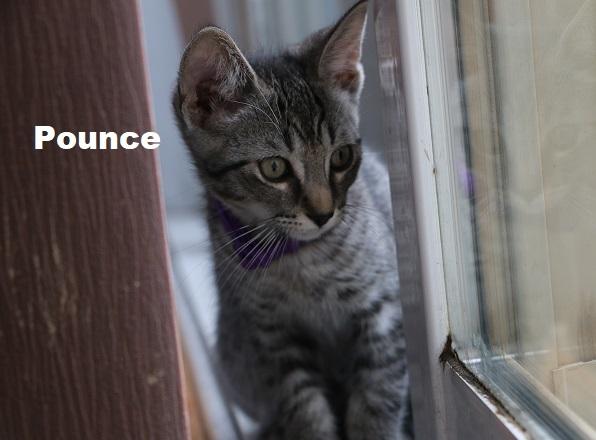 Kittens Pounce & Pascal