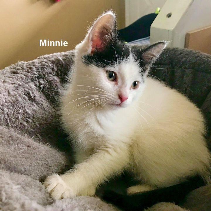 Kittens - Mickey & Minnie 4