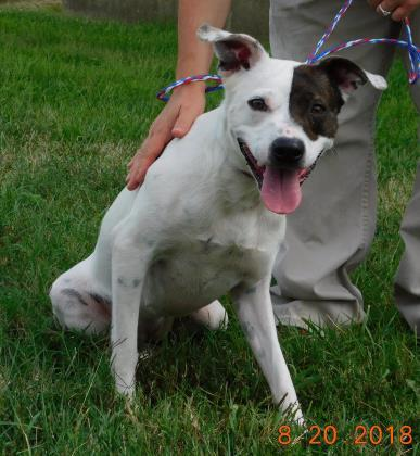 Rescue dogs in owensboro ky