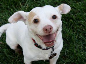 Bernardo - I'm an easy dog!