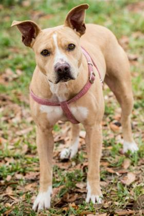 Trinity, an adoptable Terrier Mix in Loxahatchee, FL