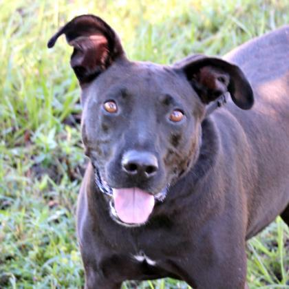 Stella, an adoptable Terrier Mix in Loxahatchee, FL