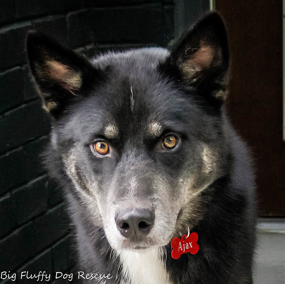 Rescue Dog Ajax 42