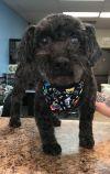 Poodle Dog: Bob Barker
