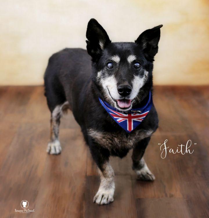 Dog For Adoption Faith A Corgi Mix In Lubbock Tx Petfinder