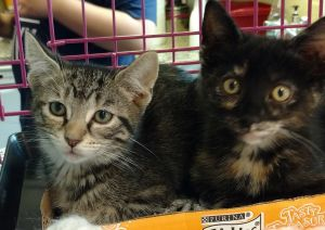 Tamminy and Stinker = foster kittens