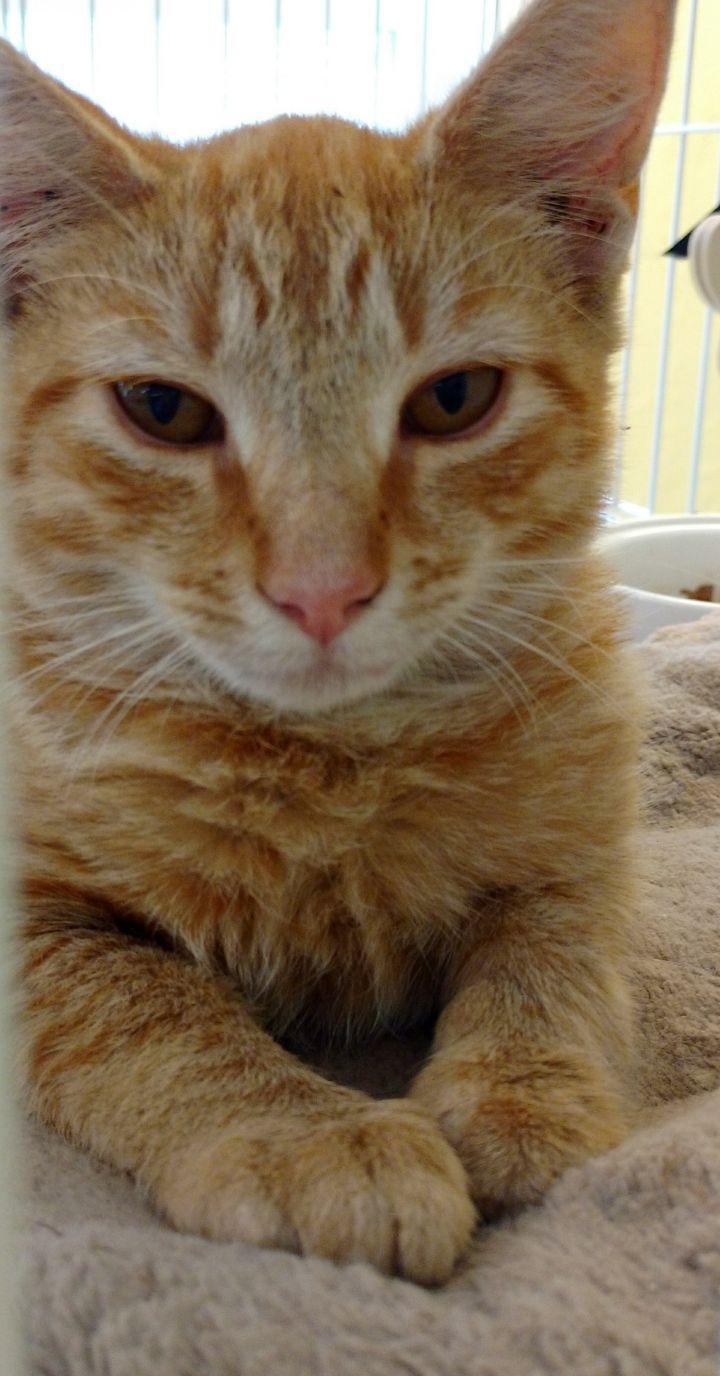 Itzy (lapcat!!) 1