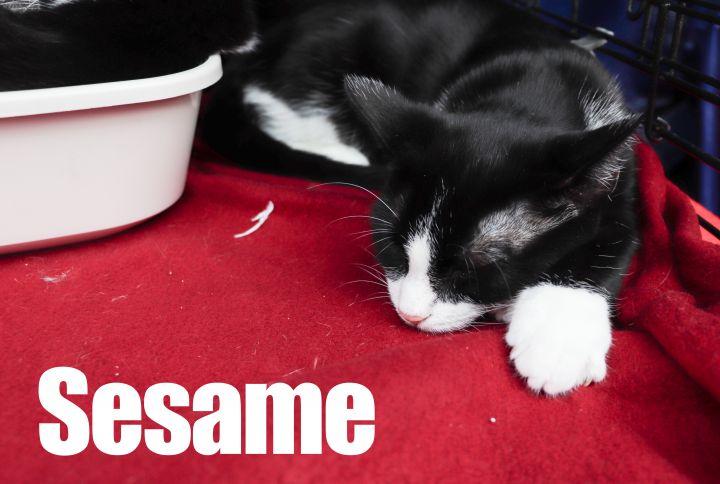 'Seed Kittens' | Sesame & Chia 2