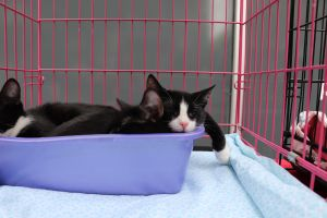 'Seed Kittens' | Sesame & Chia