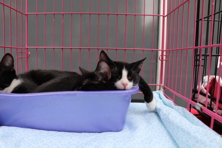 'Seed Kittens' | Sesame & Chia 1