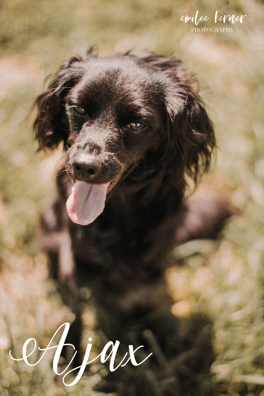 Rescue Dog Ajax 32