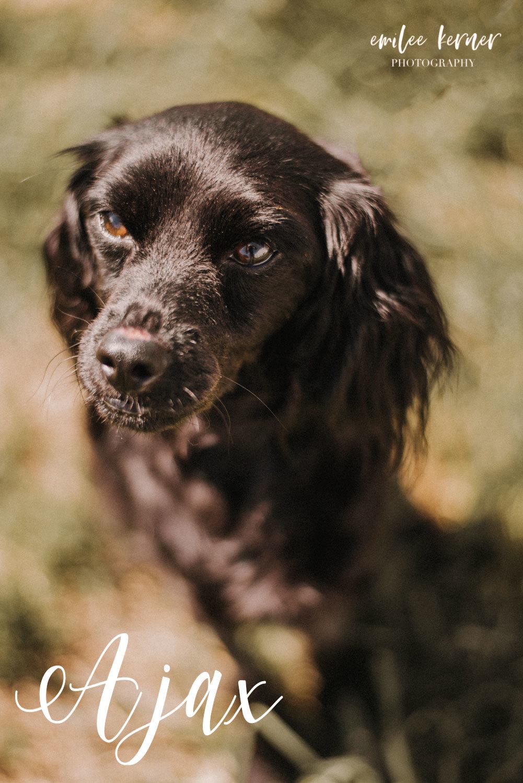 Rescue Dog Ajax 11