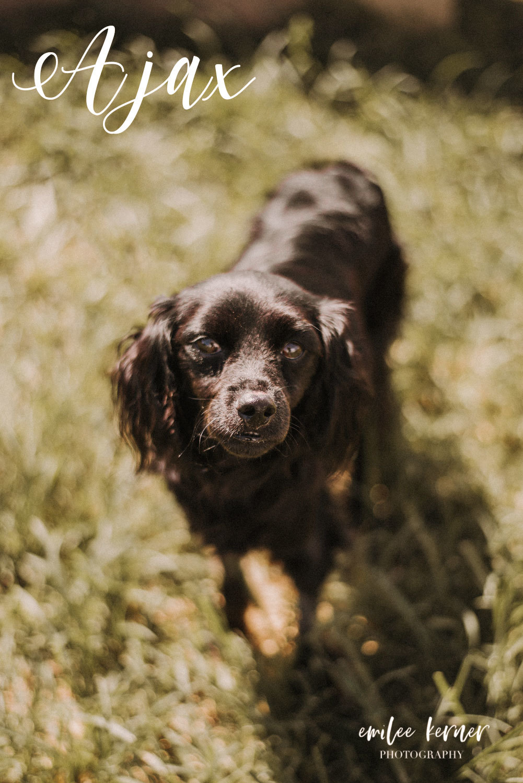 Rescue Dog Ajax 90