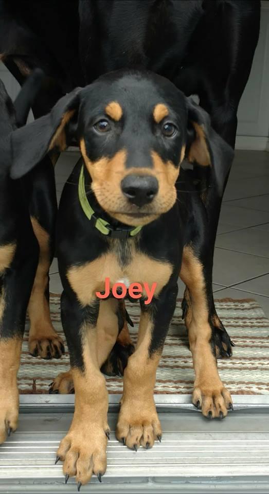 """Josephine """"Joey"""""""