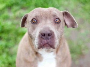 Dog For Adoption A1834927 Near Los Angeles Ca Petfinder