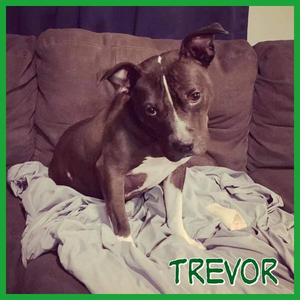 Trevor