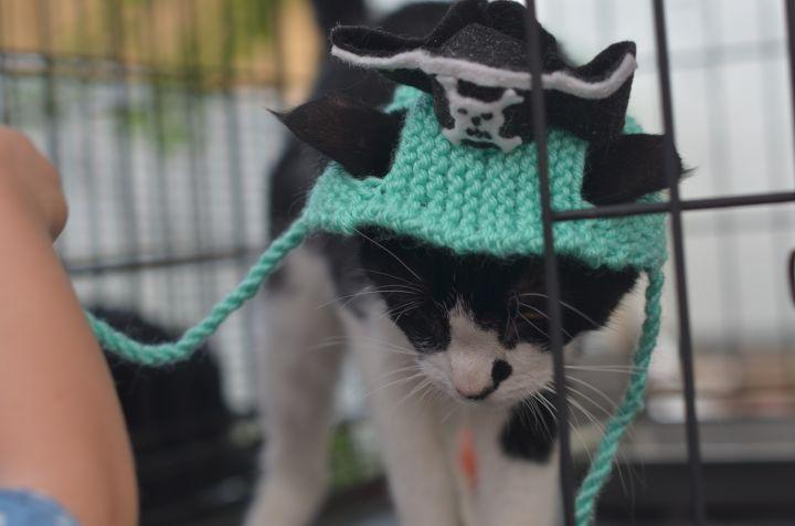 Pirate Odin 1