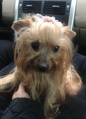 Dog For Adoption Lita Adopting Pending Near Somerville Ma