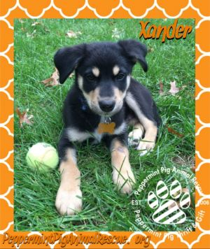 Xander ADOPTION PENDING