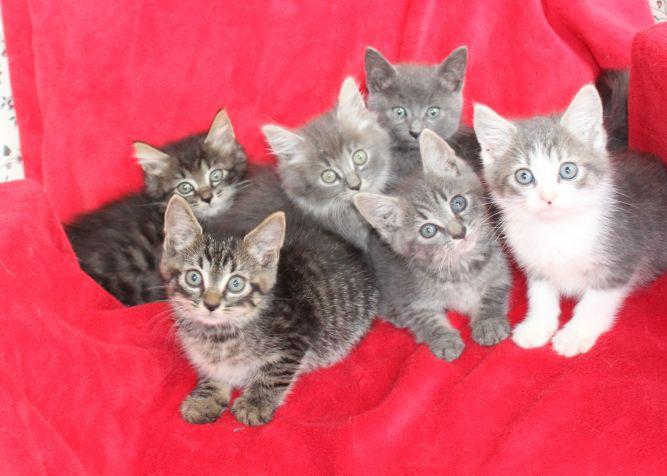 Elaine & Jerry's Kittens