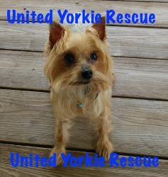 Dogs For Adoption Near 32163 Fl Petfinder