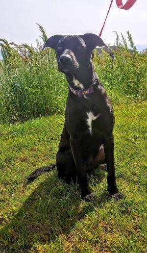Pets For Adoption Near Baton Rouge La Petfinder
