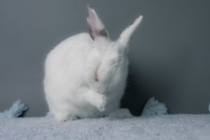At first you dont notice how beautiful she is You think Another white bunny w