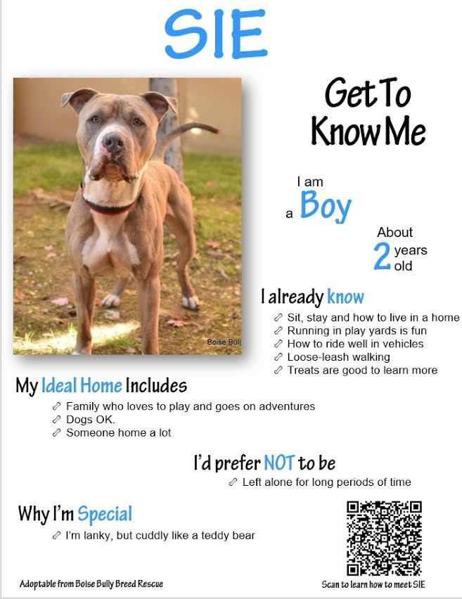 Sie, an adopted Pit Bull Terrier Mix in Eagle, ID