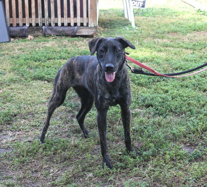 Pochontas, an adopted Hound Mix in Boca Raton, FL