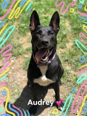 Audrey! Puppy!