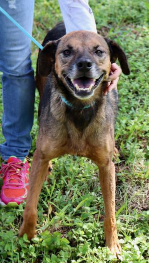Jamie is approx 7-8 years old Dont let her age fool you she is active She is a great size