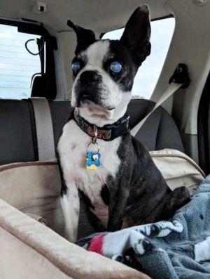 dog for adoption sooki near huntington beach ca petfinder