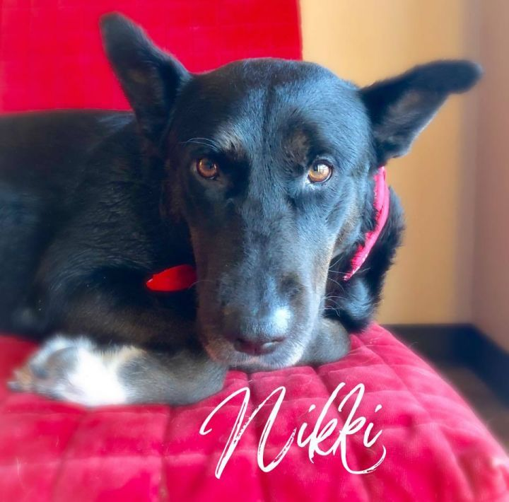 Nikki, an adoptable Shepherd Mix in Cypress, TX