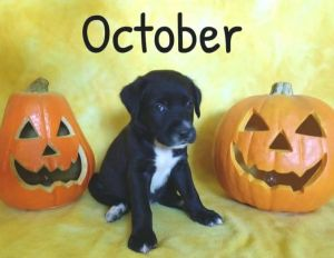 October ADOPTION PENDING