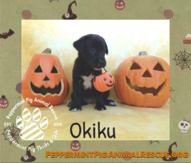 Okiku ADOPTION PENDING