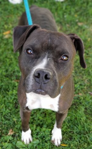 dog for adoption mandy near antioch ca petfinder