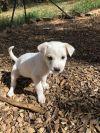 Bull Terrier Dog: Delilah
