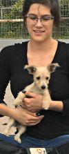 West Highland White Terrier Westie Dog: **KAREN