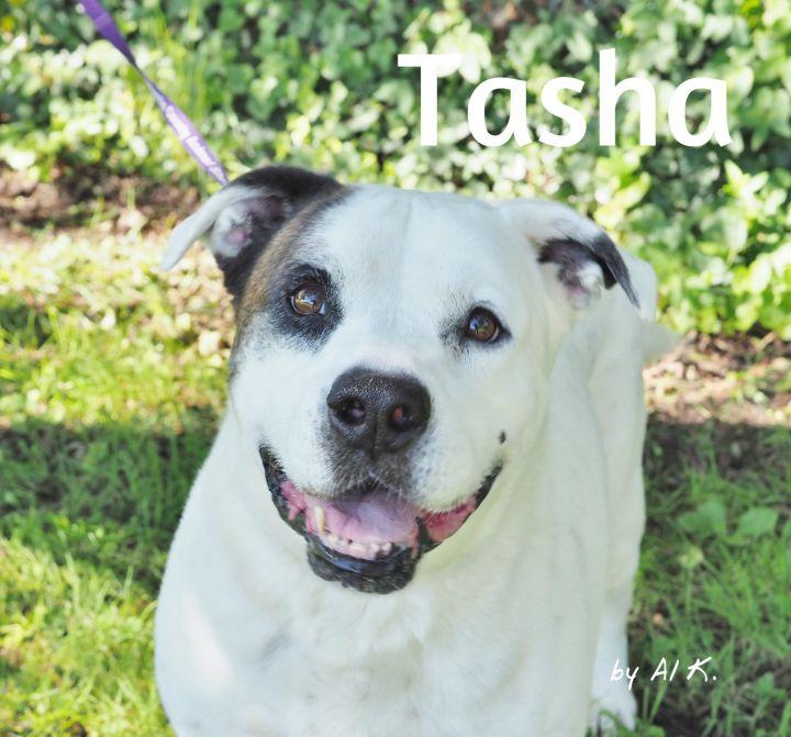 Tasha 1
