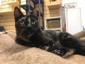 Mona is an adorable cat who has that wonderful zest for life loves to explore and is curious about